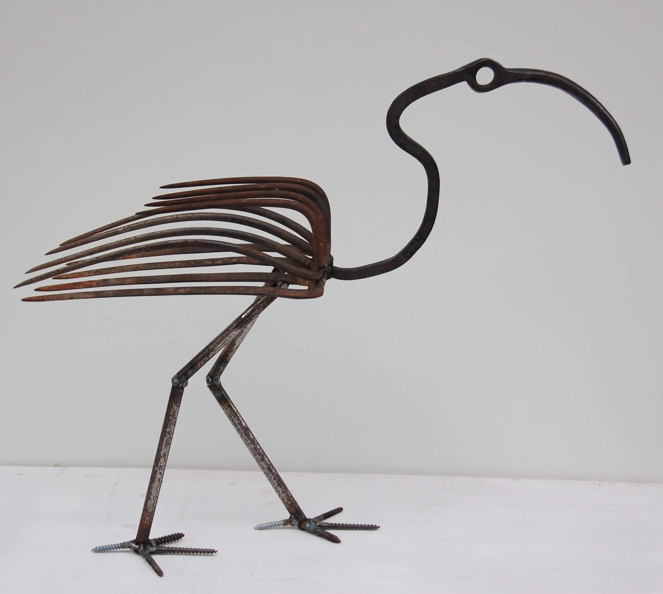 ibis mâle